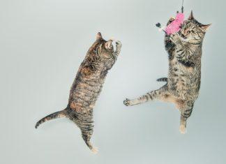 10 najśmieszniejszych kotów Internetu. FakeNews24.pl. Fakenews24. Humor. Rozrywka.